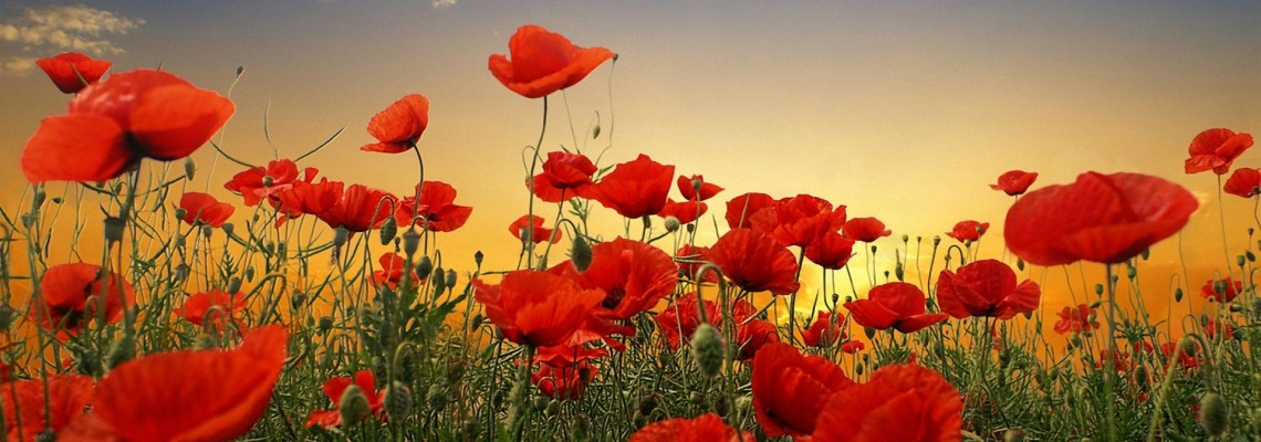 ANZAC Day 2016 Tour – The Colonel Tour 16 – Day itinerary